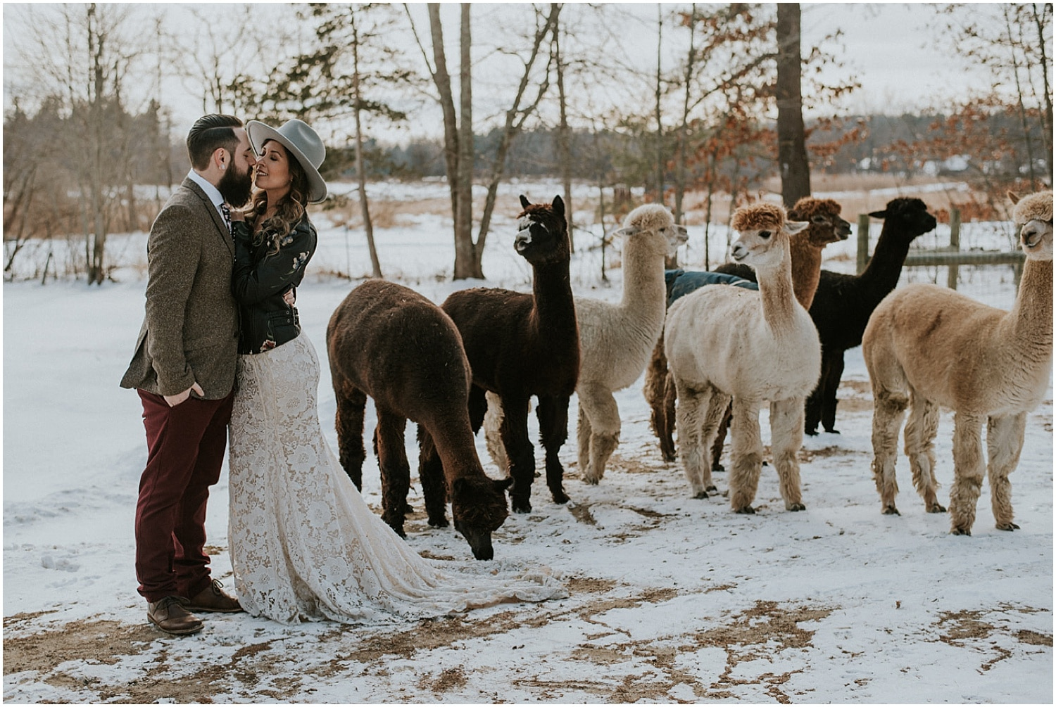 alpacas watching the bride and groom on the farm at this elopement inspiration