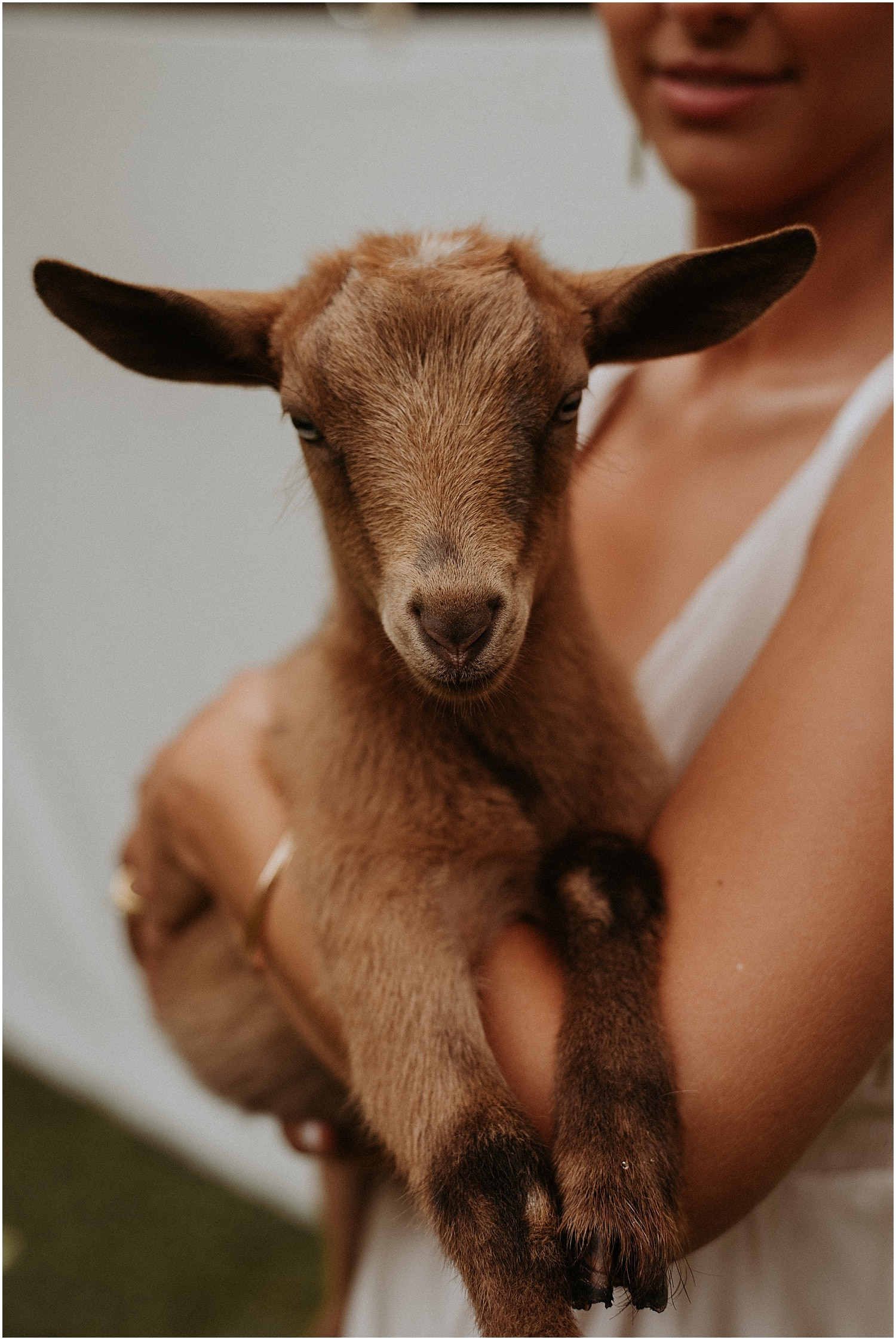 Baby goat held by bride at Josias River Farm